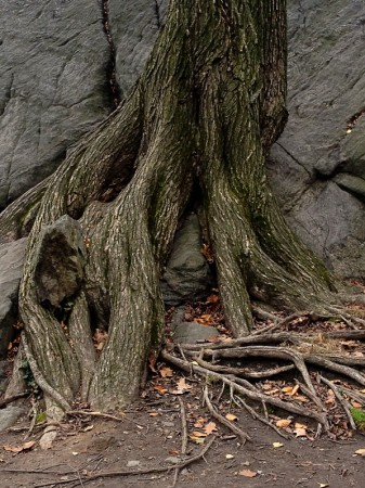 cp_tree_rock_lr